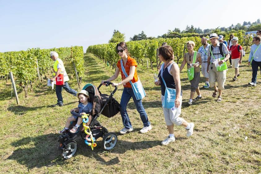 vins-vignes-activites-kids2