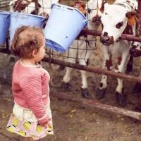 [LAIT INFANTILE] Entre les coliques, les régurgitations et récemment les scandales de lait contaminés, choisir un lait infantile n'est pas une mince affaire lorsque l'on n'allaite pas ou lors d'un allaitement mixte. Karima, maman de deux petites filles s'est rendue cet été en Normandie dans une ferme familiale. Durant cette journée, elle a pu découvrir les différents aspects d'un lait infantile biologique et en quoi il diffère d'un lait non bio.  Dans notre nouvel article, elle vous en dit plus sur la question du lait infantile de vache bio et l'engagement de la marque française @biostimefr, dont elle a pu percer les secrets lors de son voyage (lien en bio). credit photo @withalovelikethat  #agriculturebiologique #alimentationbébé  #choisirsonlait #conseilalimentationbébé #conseilsnutritionbébé #fabricationlait #laitbio #laitbiologique #laitbiostime #laitinfantile #laitnaturel #madeinfrance #nutritionbébé #respectenvironnement #jeunemaman  #mumlife