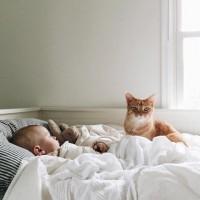 [CHAT-HEUREUX] Dimanche cocooning avec votre bout de chou et instants câlins avec votre animal de compagnie. Chats ou chiens, ils se montrent souvent très protecteurs avec bébé et ces moments d'affection sont tout aussi importants pour lui que pour votre enfant. . Avez-vous des anecdotes à nous raconter ? ☺️ . credit photo @pinterest  #instantcalin #baby #cat #love #cocooning #dimanche #cocooning #hug #mignon #dormir #instababy #mum #instamum #mumlife #jeuneparent #jeunemaman #bebe #dodo #doudou #affection #animal #enfant #children #instachild #family #happyfamily #goodtime #sunday