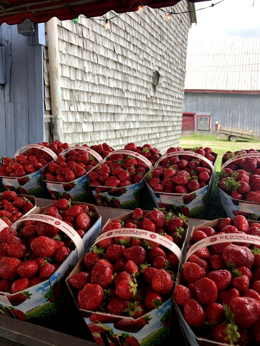 road-trip-famille-quebec-fraises-ile-d-orleans