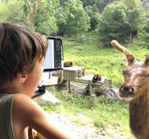 Notre road-trip famille en camping-car au Québec