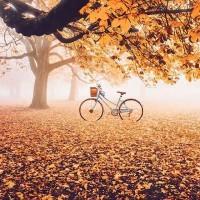 [BALADE] Et sur son chemin, remplir son panier de champignons, de marrons, de pommes de pin, de feuilles mortes pour décorer sa maison…ou simplement humer les odeurs de la forêt et écouter le son de nos pas sur son tapis. Il est là le bonheur de l'automne ! . Photo : makeeva15 #foret #nature #reconnectwithnature #feuillesdautomne #automne #baladeenforet #cueillettesauvage #cueillettedechampignons #marrons #promenade