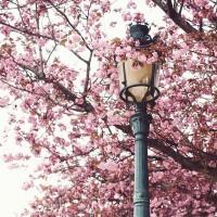 [SPRING] Une sublime journée qui commence pour ce premier week-end de printemps